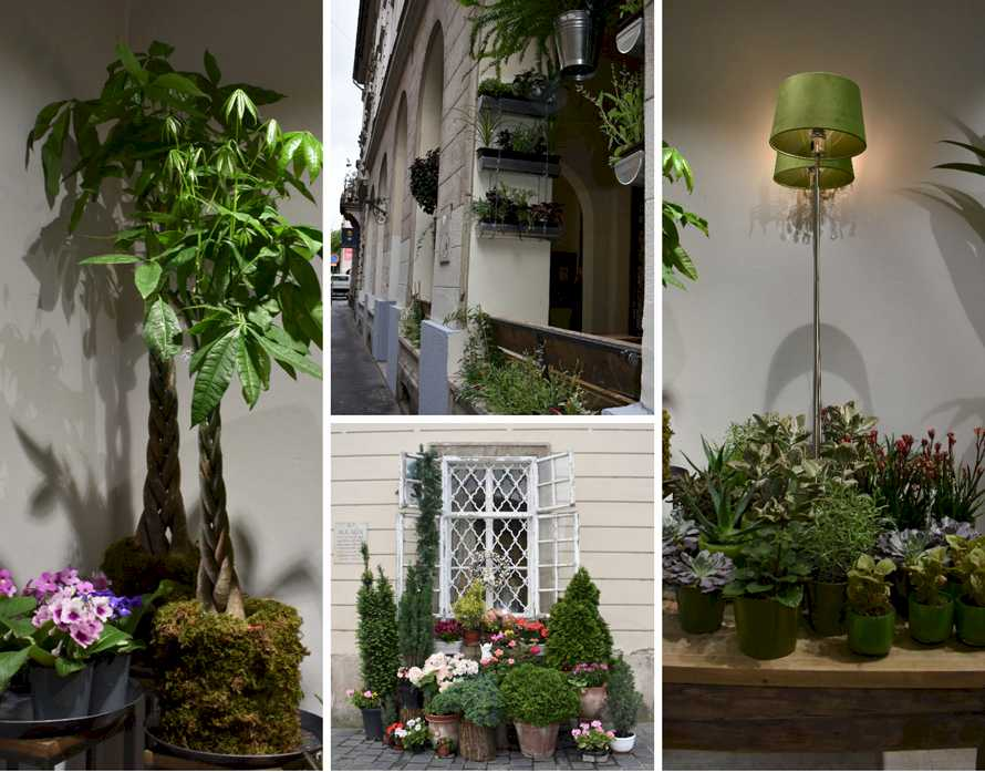 Popular Plants | OASIS Floral Products