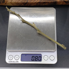 Hemp Stem On Scale