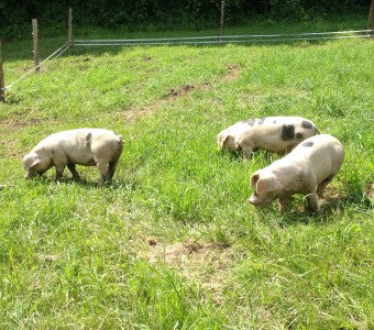 Studio Hill Pastured Pork 2014