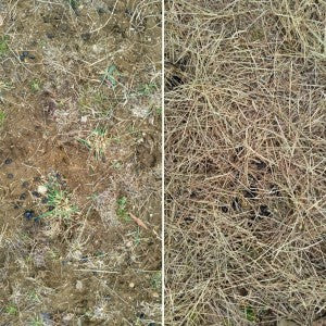 Side-by-side comparision of bare ground grazed and not grazed.
