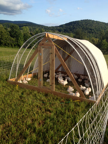 Studio Hill Chicken Tractor