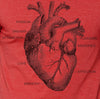 Anatomy of the Heart T-Shirt
