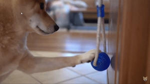 Suction Cup Tug-O-War Dog Toy