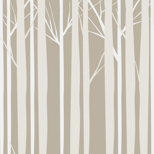 Aspen Grove Photo Background