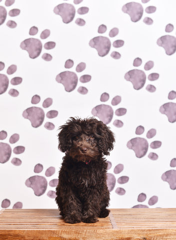 Paws Photo Backdrop