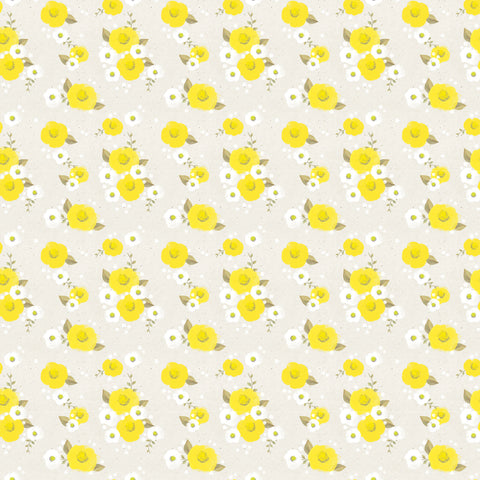 Daisies Photo Background