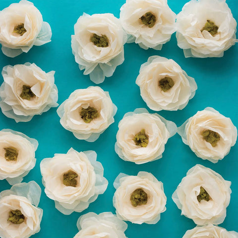 Ranunculus Photo Background