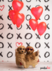 XO Hearts Photo Backdrop