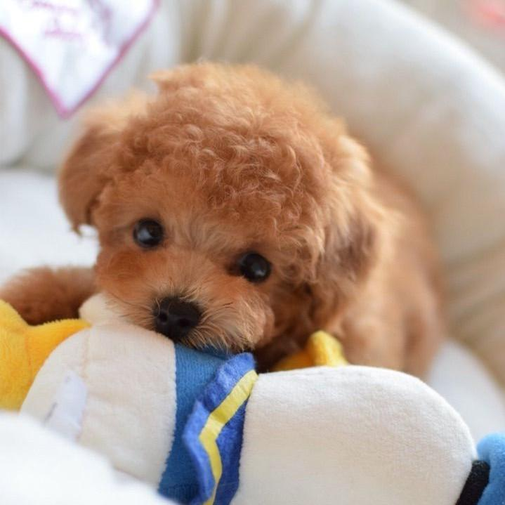🔥Realistic Teddy Dog Lucky