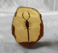 Fossil Amber Slice