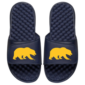 Cal Gold Bear Slides