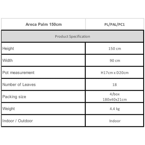 Areca Palm 150cm Specifications