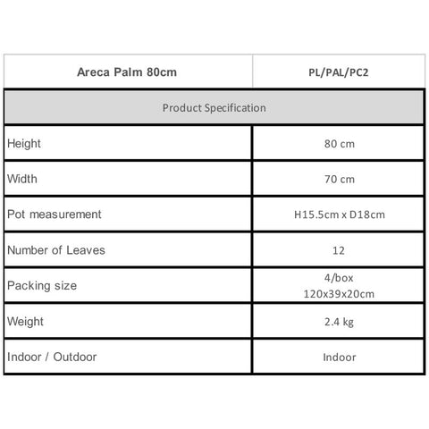 Areca Plam 80cm Specifications