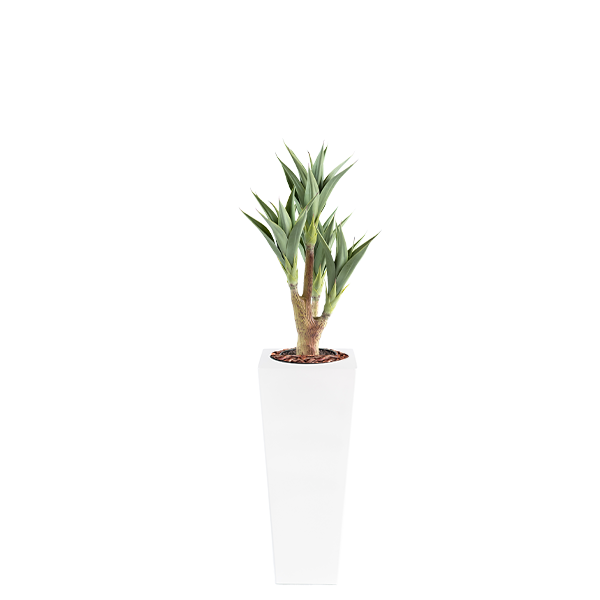 Armani B with Agave 105cm - PLANTS IN POTS
