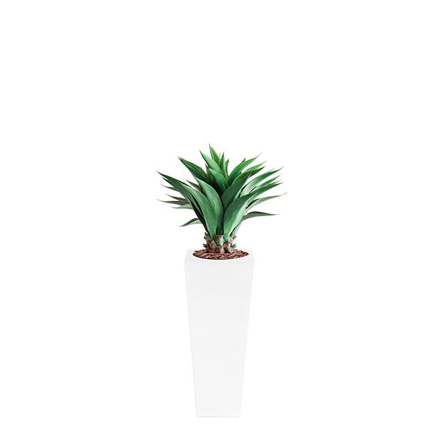 Armani B with Agave 90cm - PLANTS IN POTS
