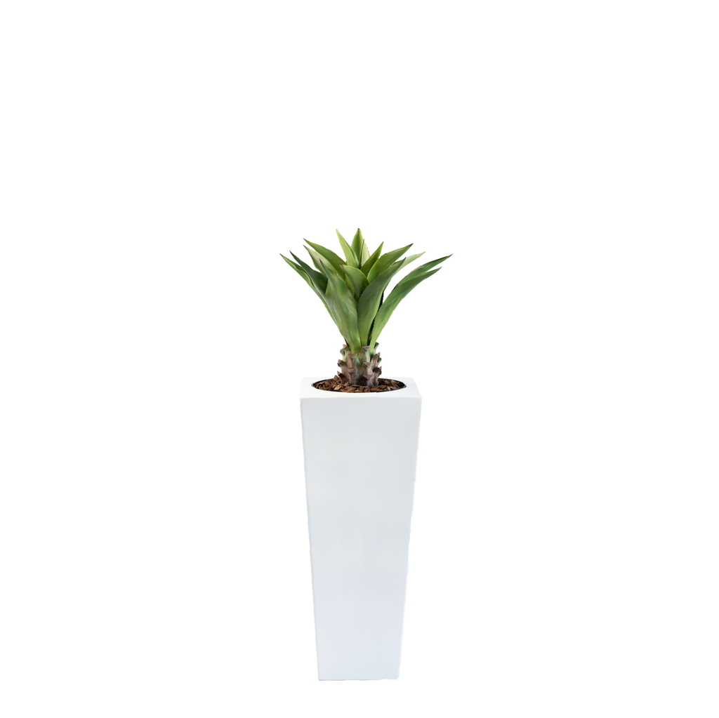 Armani B with Agave Middle 90cm - PLANTS IN POTS