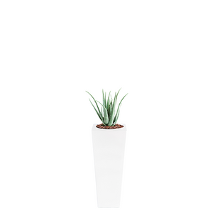 Armani B with Aloe 70cm - PLANTS IN POTS