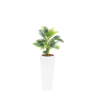Armani B with Areca 90cm - PLANTS IN POTS