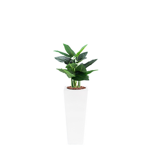 Armani B with Calla Lily 90cm - PLANTS IN POTS