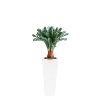 Armani B with Cycas 93cm - PLANTS IN POTS