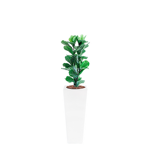 Armani B with Fiddle Leaf Ficus 87cm - PLANTS IN POTS