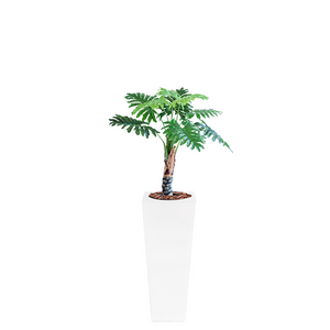 Armani B with Philodendron 90cm - PLANTS IN POTS