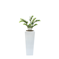 Armani B with Zamifolia 87cm - PLANTS IN POTS