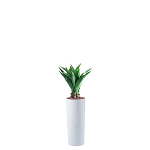 Cardin B Fiberglass Pot 35cm dia x 80cm high with Agave Middle Faux Plant 90cm