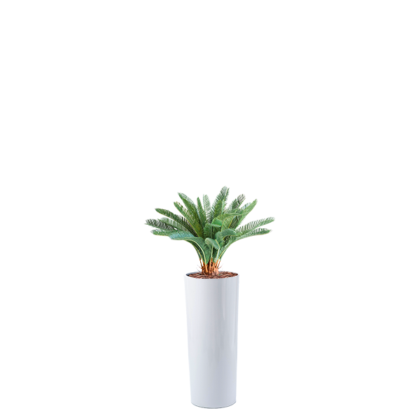 Cardin B Fiberglass Pot 35cm x 80cm With Artificial Cycas 72cm