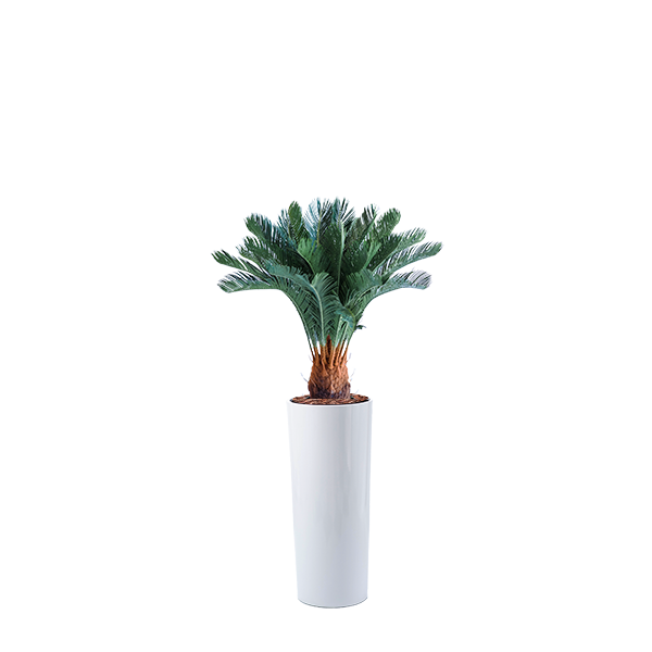 Cardin B fiberglass pot with Artificial Cycas 93cm