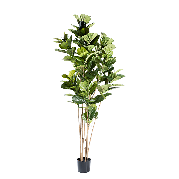 Faux Fiddle Leaf Ficus 180cm in black weighted pot