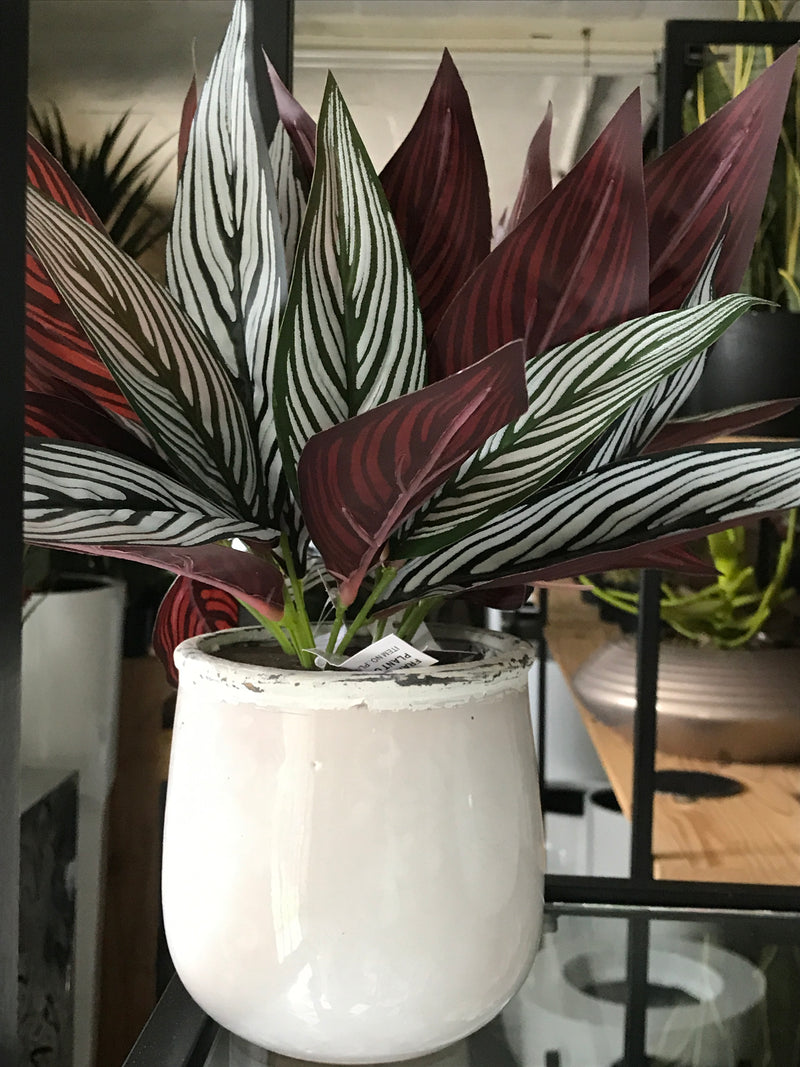 Peacock Maranta Bush 30cm Real Touch - ARTIFICIAL PLANTS