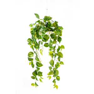 Valli Hanging Pot with Hanging Epipremnum - PLANTS IN POTS