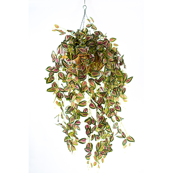 Hanging Basket M with Perilla Hanging Bush - PLANTS IN POTS