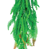 Hanging Boston Fern 78cm