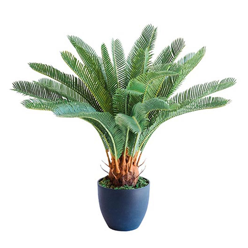Armani B with Cycas 72cm - PLANTS IN POTS