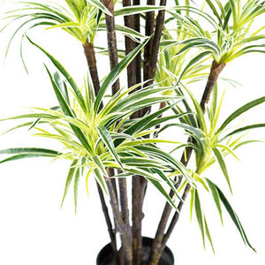Dracaena Fragrance 160cm - ARTIFICIAL PLANTS
