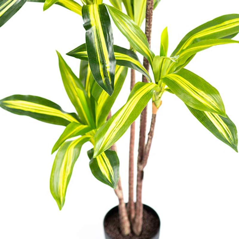 Dracaena Variegated 160cm - ARTIFICIAL PLANTS