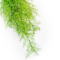 Artificial Hanging Asparagus fern 112cm green  Close up