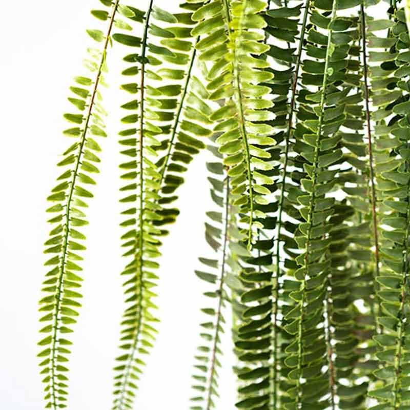 Hanging Fern 165cm - ARTIFICIAL PLANTS