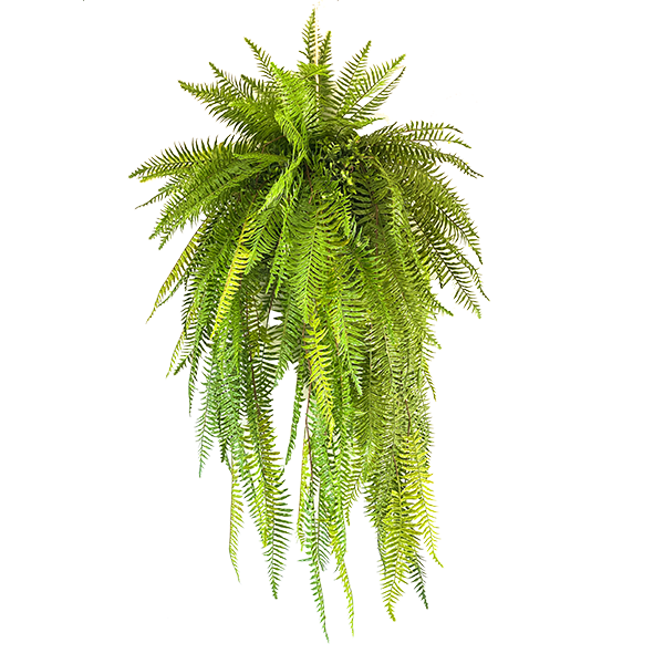 Hanging Fern Ball 135cm