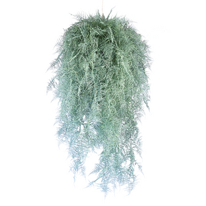 Hanging Fern Ball Grey Asparagus Fern