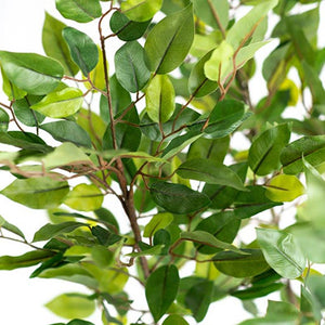 Ficus Mini Tree 135cm - ARTIFICIAL PLANTS