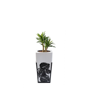 Gaultier DL with Dracaena 80cm - PLANTS IN POTS