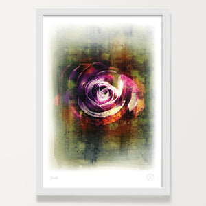 Damask rose art print