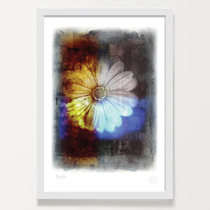 Dayseye. Red Daisy art print