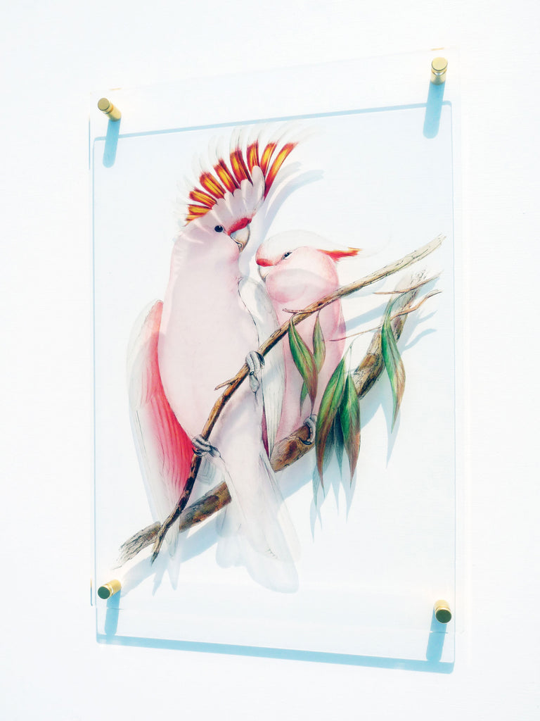 Signarture Pink Cockatoo Acrylic Glass Artwork