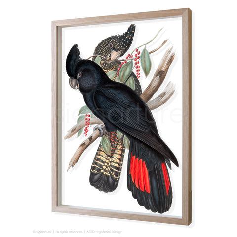 black-cockatoo 3D-framed perspex art