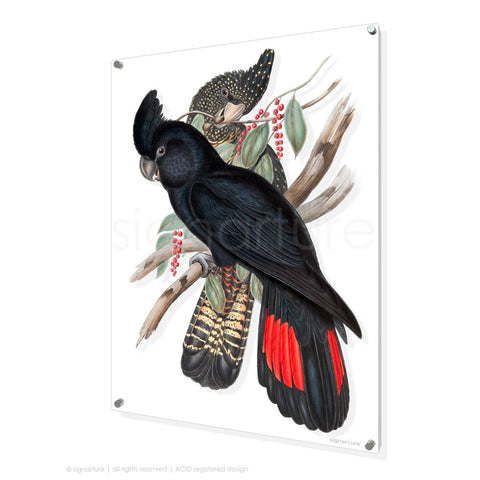 bird perspex art print black-cockatoo