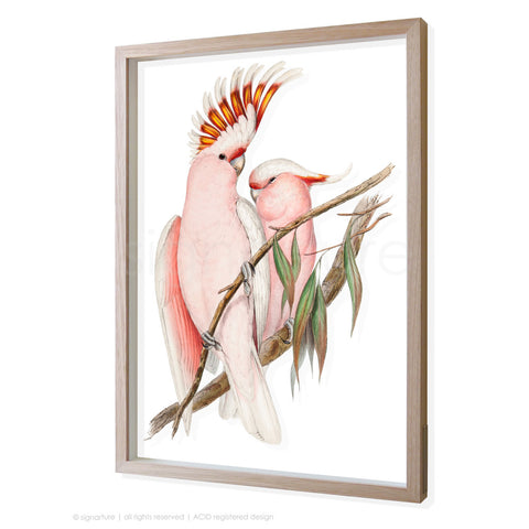 pink-cockatoo 3D-framed perspex art